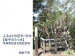 ふるさとの巨木・古木 【蛭子のうつ木】 青森県指定天然記念物(樹齢不明)