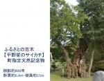 ふるさとの古木 【平野家のサイカチ】  町指定天然記念物(樹齢約800年 幹周約6.4m・樹高約15m)