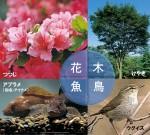 階上の花(つつじ)、木(けやき)、魚(あぶらめ)、鳥(うぐいす)