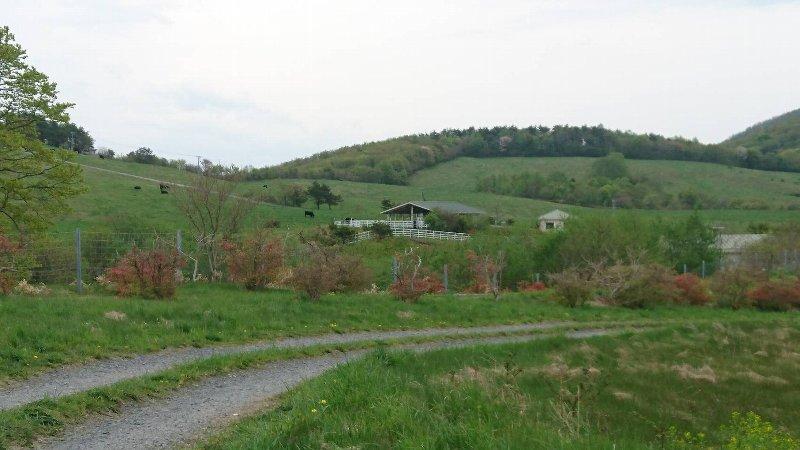 階上岳の放牧場